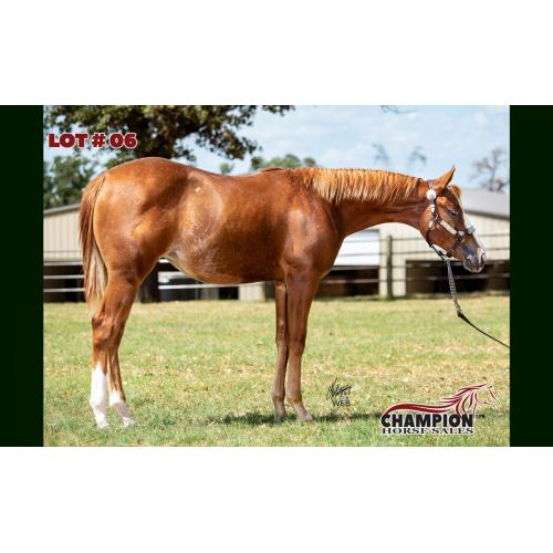 LOT 06 - WERE TALKIN BLAZED